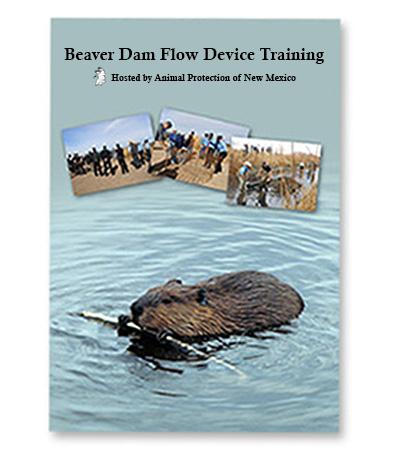 beaver-video-cover