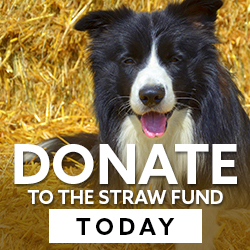 donate-to-straw-fund