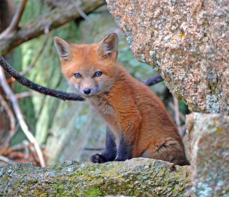 promoting-coexistence-with-wildlife
