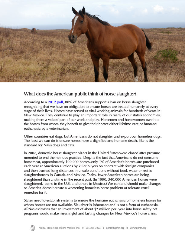 Horse slaughter fact sheet