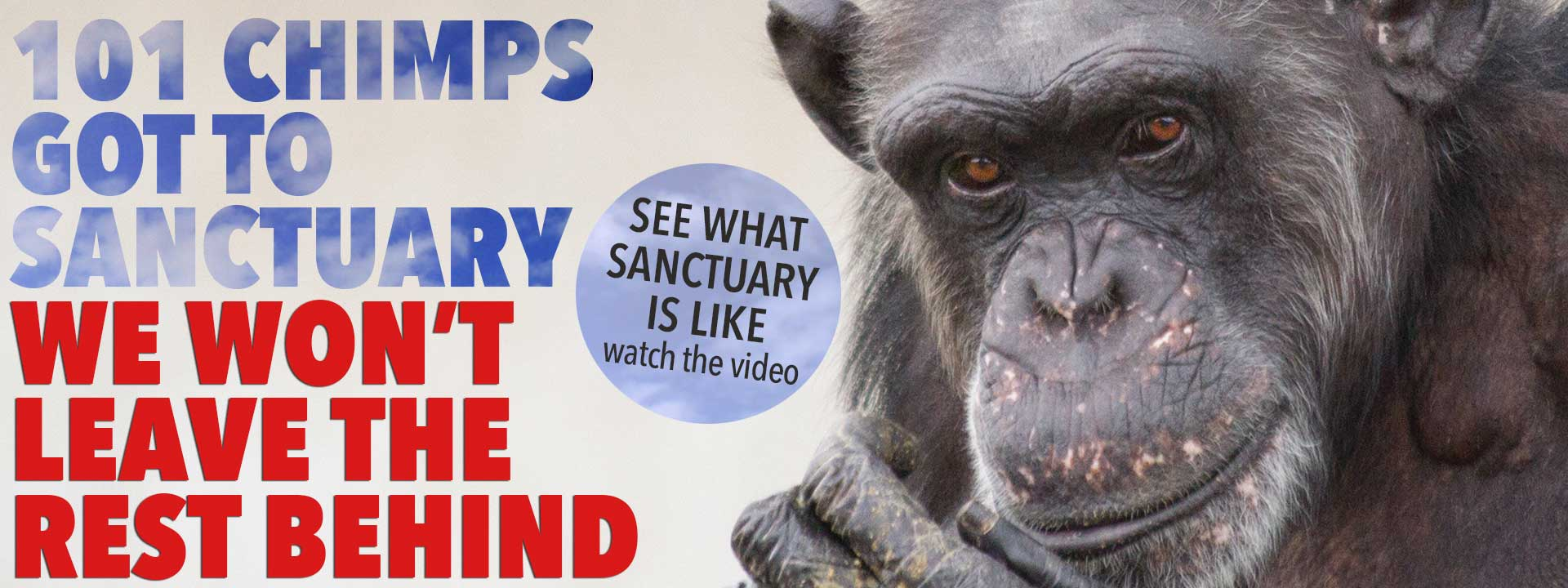 Chimpanzees to Sanctuary