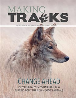Making Tracks 2018 Issue 2