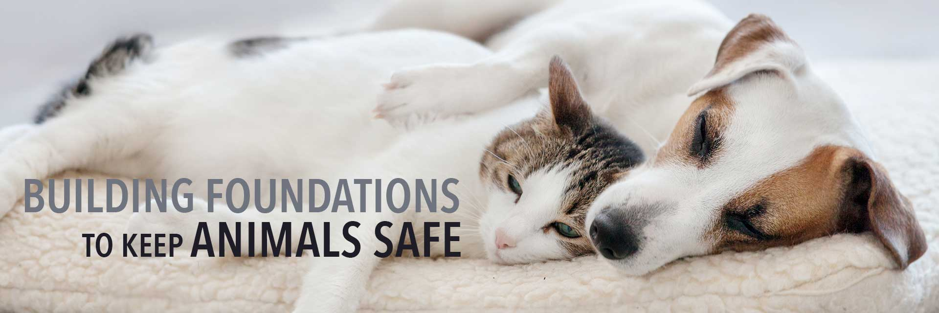 Building Foundations to Keep Animals Safe