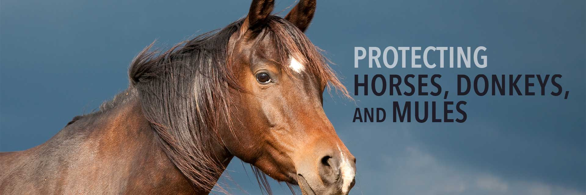 Protecting Horses, Donkeys, and Mules