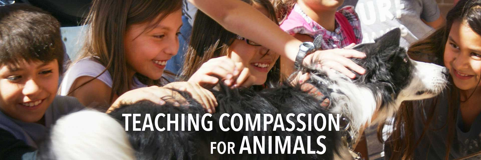 Teaching Compassion for Animals