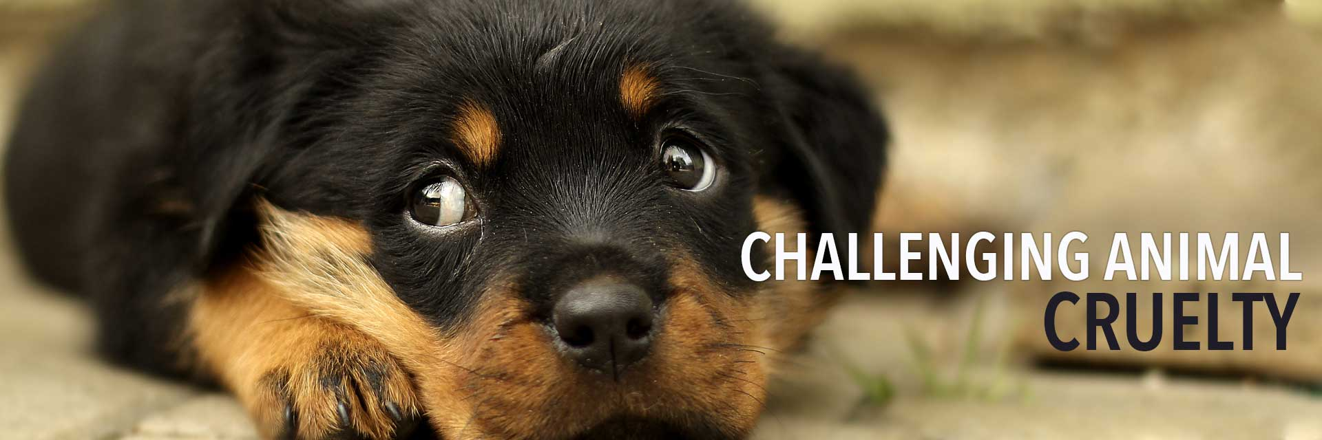 Challenging Animal Cruelty