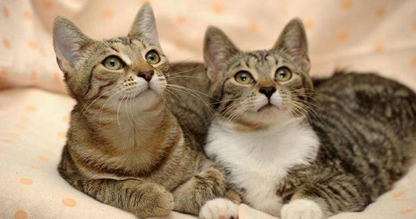 Cat Honorarium