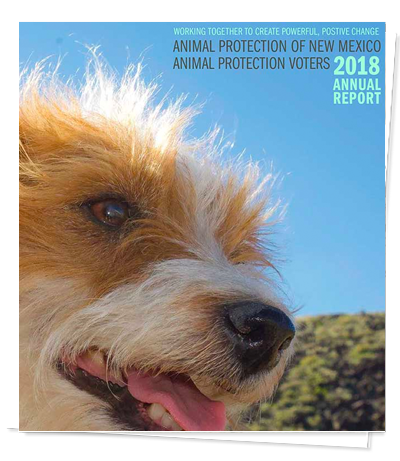 Animal Protection of New Mexico – 40 years of positive change