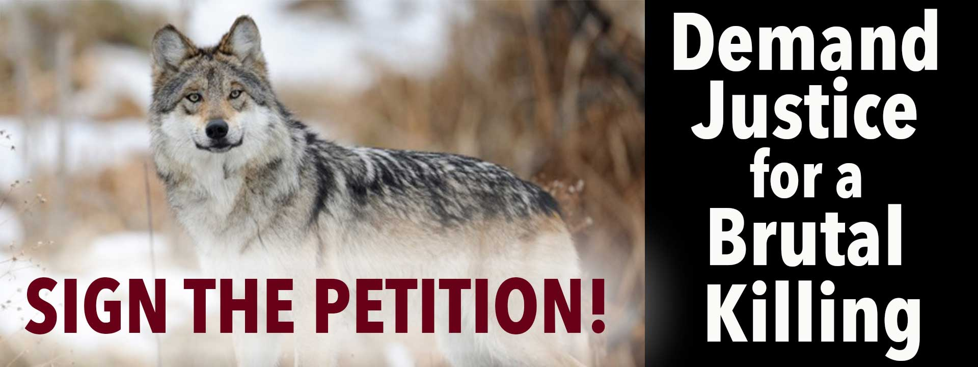 Sign the Petition - Demand Justice for a Brutal Killing