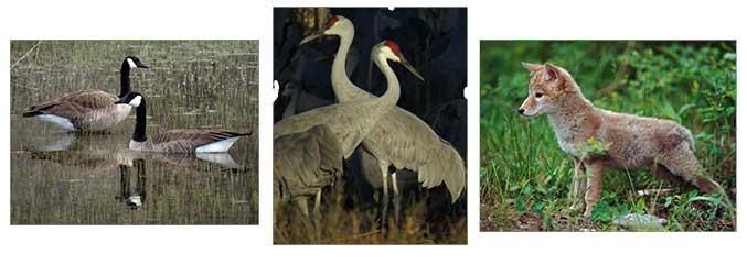 Rio Grande animals