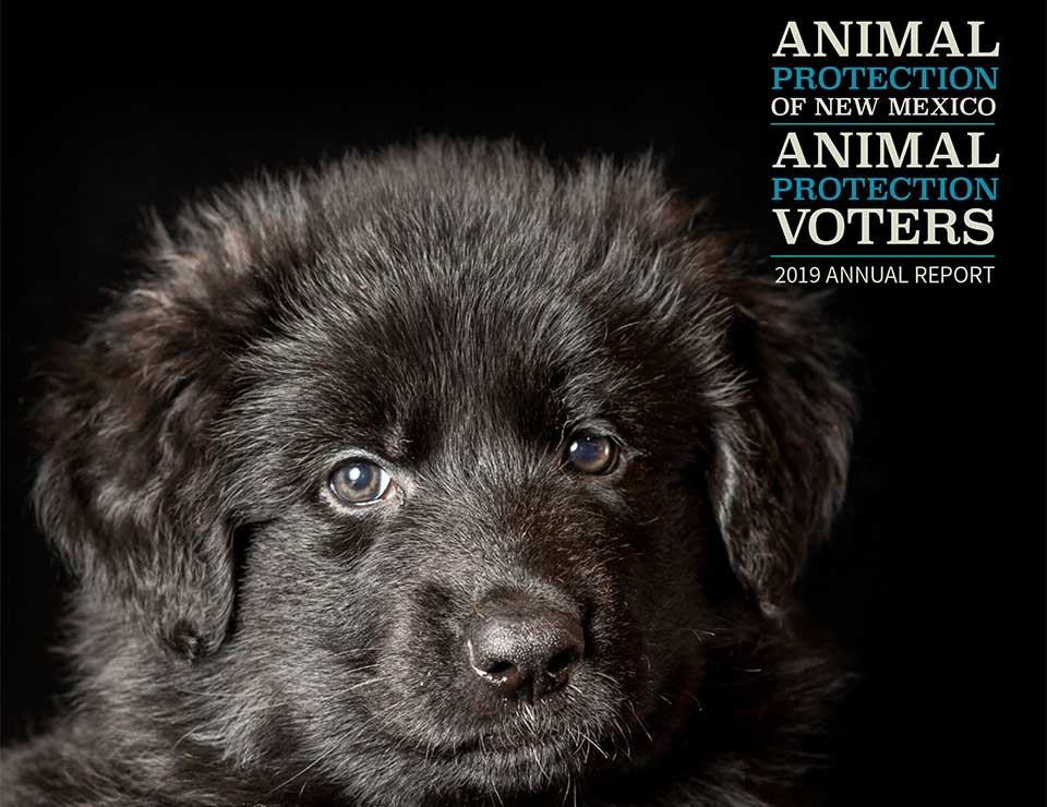 Animal Protection New Mexico Animal Protection Voters 2019 Annual Report