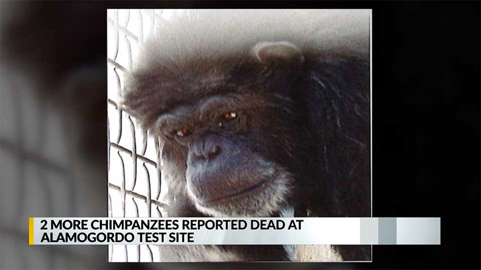 Two Additional Chimps Die at Alamogordo Testing Site